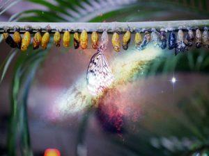 Un cambio: conjunto de crisálidas con una mariposa a punto de volar, el conflicto