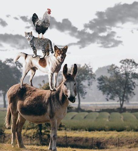el burro es el protagonista y el perro , el gato y el gallo encima de el son los personajes