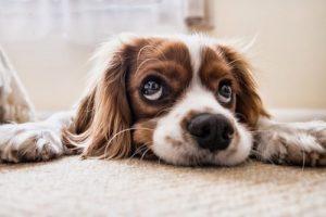 Un perro mira pasivamente la realidad